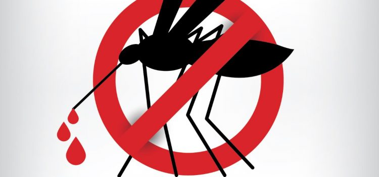 Things You Must Know About Dengue Fever