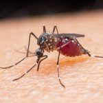 What is Malaria Fever?