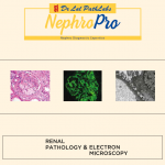 Renal Pathology and Electron Microscopy
